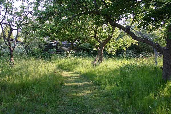 naturhave havestil vild med vilje