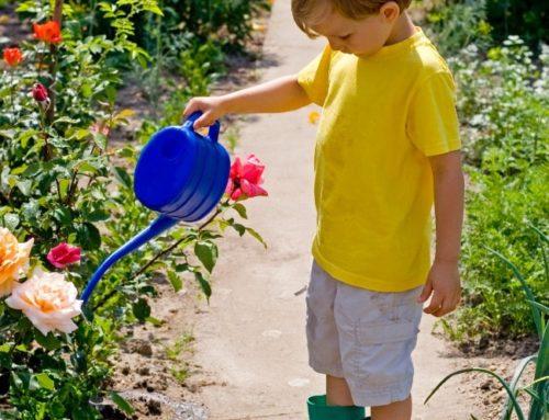 Sådanhjælper du haven gennem en tør sommer