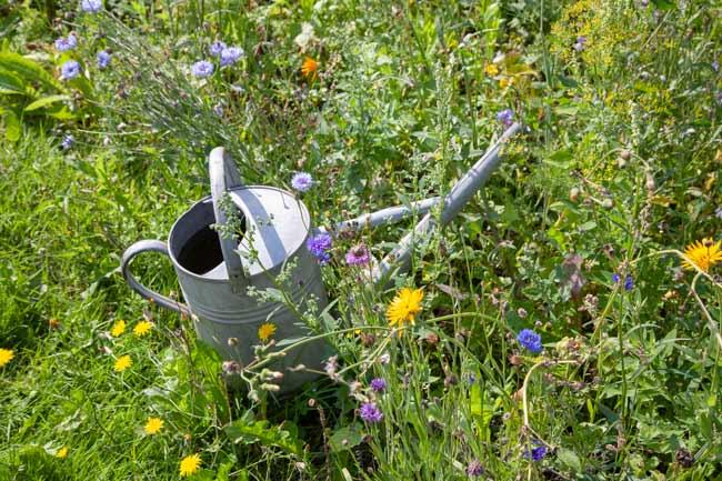 Miljørigtig have
