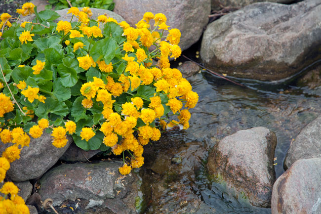 Planter til fugtige forhold