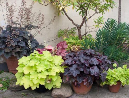 Genial bladplante